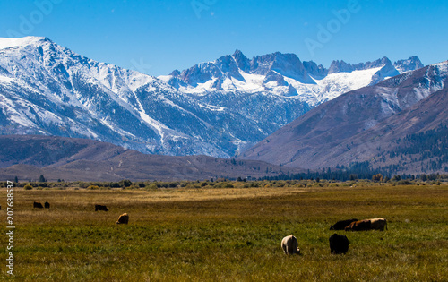 Fotobehang Blauw Mountains with aspens in fall
