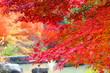 紅葉の公園の風景4
