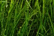 Detail of water drops on grass mixture on cultivated lawn during morning spring sunshine