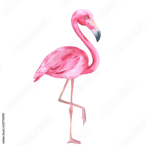 Tropical bird. Pink flamingo 2. Watercolor illustration, isolated on white