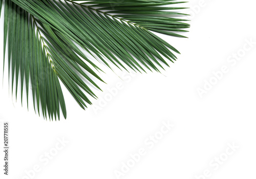 Palm coconut leaves on white background