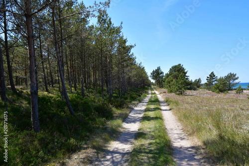 Fotobehang Weg in bos Impressions from Bialogora