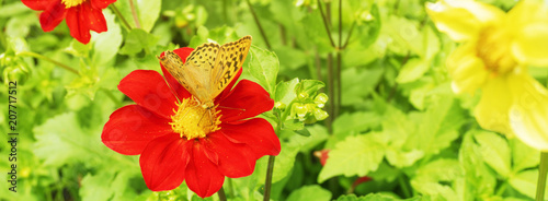 Fotobehang Vlinder Yellow butterfly on a red flower.