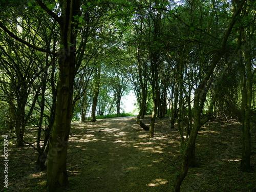 Fotobehang Weg in bos Sous-bois