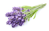 Lavender flowers on white background - 207741760
