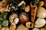 Seashell background texture - 207742156