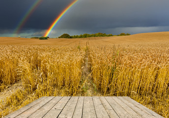 Approaching thunderstorm to the field with ripening wheat, concept of forecasting or / and harvest season.