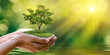 environment Earth Day In the hands of trees growing seedlings. Bokeh green Background Female hand holding tree on nature field grass Forest conservation concept - 207747770