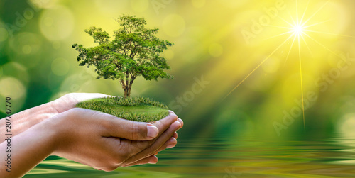 Leinwanddruck Bild environment Earth Day In the hands of trees growing seedlings. Bokeh green Background Female hand holding tree on nature field grass Forest conservation concept