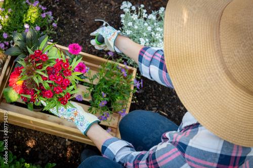 Unrecognizable female gardener planting flowers in her garden. Gardening concept. Overhead view.
