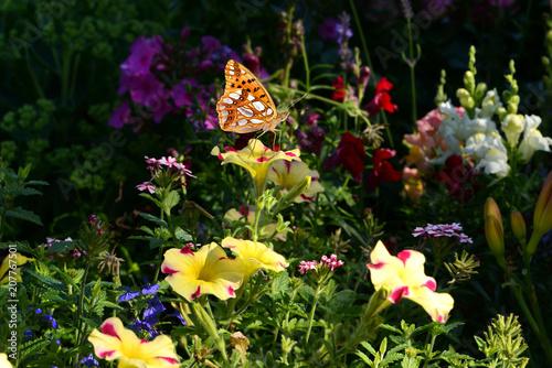 Fotobehang Zwart Schmetterling 462
