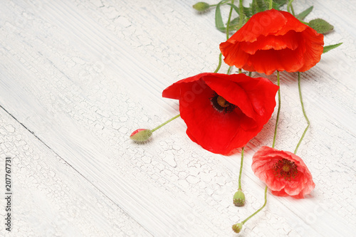 Red poppy flowers on white rustic wood. - 207767731