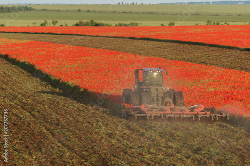Fotobehang Baksteen Blue tractor plows the field with red poppies.