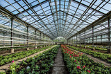 flowers farm with stained-glass in summer day without of staff. - 207768398