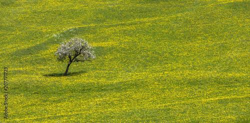 Foto Murales Blütenbaum in Blumenwiese