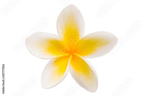 Fotobehang Plumeria frangipani isolated