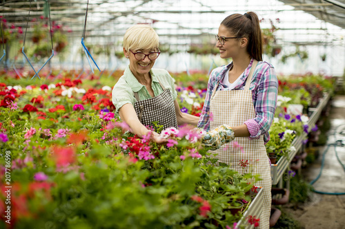 Senior and young women working together in flower garden at sunny day