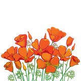 Vector bouquet of outline orange California poppy flower or California sunlight or Eschscholzia, green leaf and bud isolated on white background. Contour poppy for summer design.