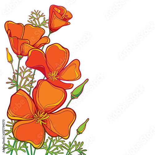 Vector corner bouquet of outline orange California poppy flower or California sunlight or Eschscholzia, green leaf and bud isolated on white background. Ornate contour poppies for summer design. - 207794570