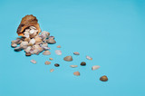Seashells in a large shell on a blue background - 207795138