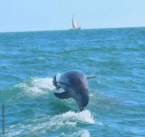 Aluminium Dolfijn Diving Dolphin