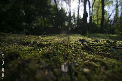 Fotobehang Betoverde Bos My Enchanted Wood