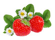Strawberry with flower isolated on white background