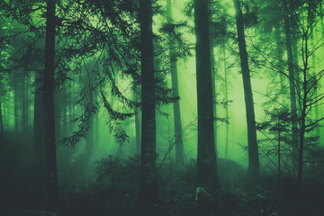 Fantasy dark green colored fairytale foggy forest tree landscape. Color filter effect used. © robsonphoto