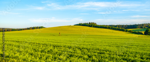 Fotobehang Lente Green field panorama landscape. Panoramic view in the spring evening.