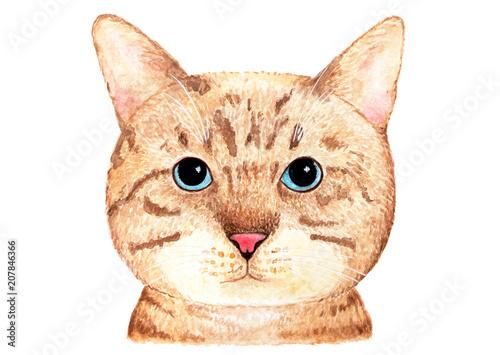 portret-brytyjskiego-kota-ilustracja-akwarela-brytyjski-kot-z-niebieskimi-oczami-na-bialym-tle-element-projektu