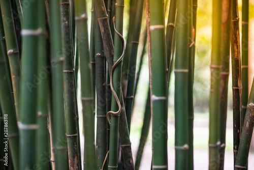 Aluminium Bamboe green snake is on the bamboo.