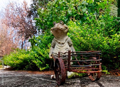Fotobehang Kikker Raggedy Old Frog