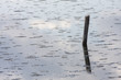 stick in the lagoon