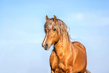 Portrait of a palomino stallion - 207884503