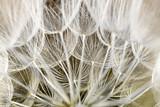 dandelion seed background. Seed macro closeup. Spring nature - 207889757