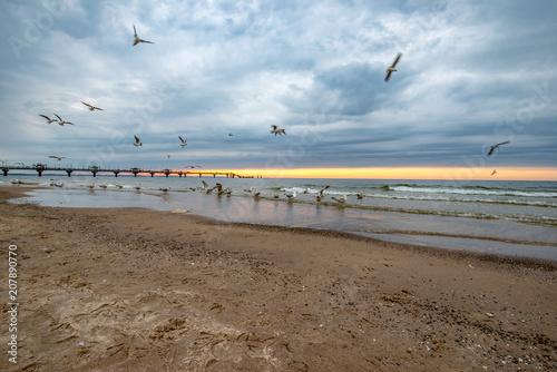 stado ptaków morskich o zmierzchu na plaży w Międzyzdrojach, Polska