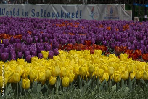 Fotobehang Tulpen Tulip Festival in Istanbul