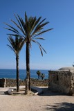 viaggi paesaggio natura mare palme alberi acqua sole azzurro