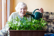 Leinwanddruck Bild - Senior woman of 90 years watering parsley plants with water can at home