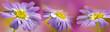 Leinwanddruck Bild - flower with rain drops - a macro photography