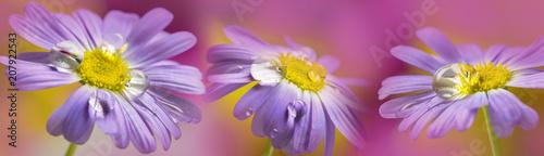 Leinwanddruck Bild flower with rain drops - a macro photography