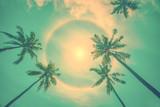 Sun rainbow circular halo phenomenon with palm trees, vintage summer background - 207929350