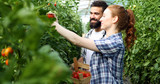 Young couple of farmers working in greenhouse - 207930571
