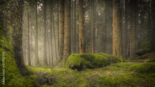 Baumstämme auf moosigem Waldboden mit bemoosten Steinen und nebligem Hintergrund