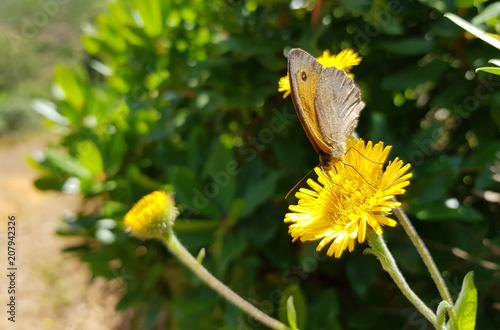 Aluminium Vlinder Farfalla