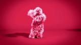 Colorful Monkey Dancing Gangnam Style - 207944549
