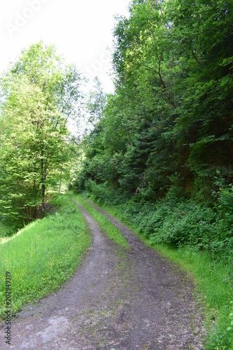 Fotobehang Weg in bos Waldweg in der Eifel 06/18