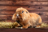 Brown beautiful rabbit with hay on wooden background - 207963396