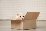Ginger cat lying in the cardboard box - 207963519