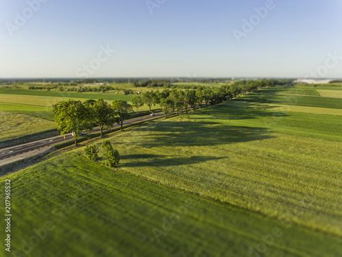 Fotobehang Weg in bos Road and green fields.